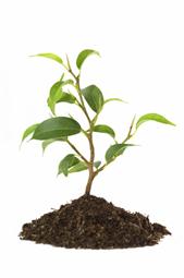 hoe groeien planten